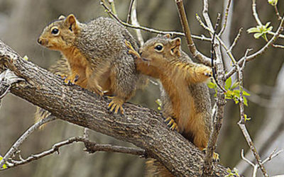 It's time for some squirrel sex!